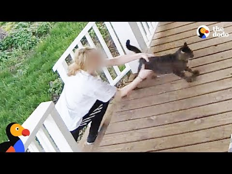 Cat Escapes From Woman Trying to Steal Him - SECURITY FOOTAGE | The Dodo