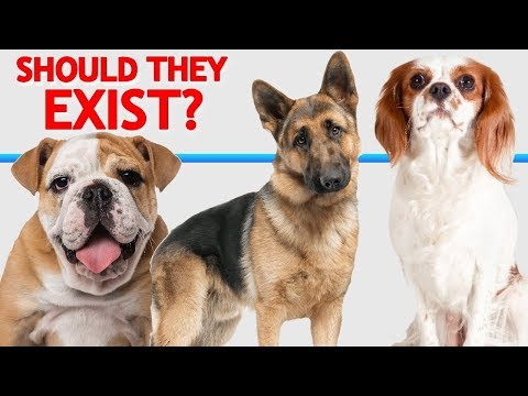 Should These Dogs Exist? Have We Gone Too Far?