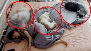 Download 【喵來啦】監控和5只貓睡1晚會發生什麼?看完不想養貓了 Video