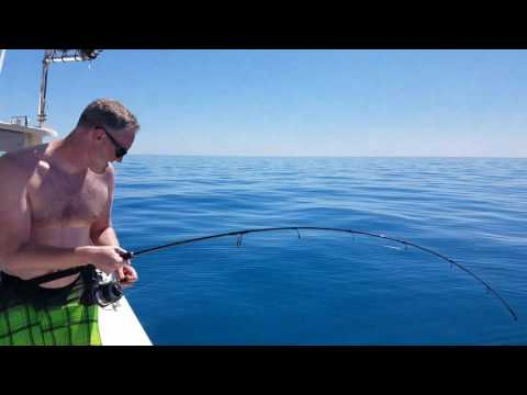 Florida Keys Goliath Grouper Catch and Release