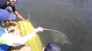 Macing Patin 8 kg  di Cirata 2010.3gp