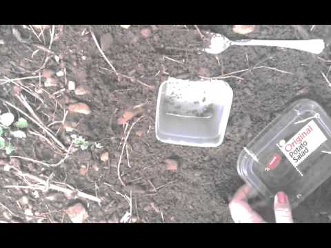 How to get earwigs out of your garden