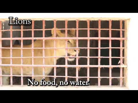 Zoo of Death - Close down Prey Veng Zoo in Cambodia March 2015