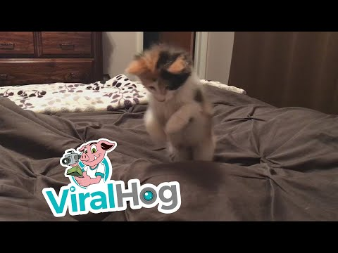 Cute Kitten Pounces on Feet in Bed || ViralHog