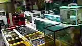 Download Busan Raw Fish Market Video