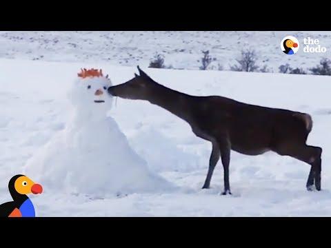 Deer Meets Snowman And Devours Him   The Dodo