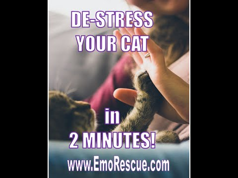 De stress Your Cat in Two Minutes