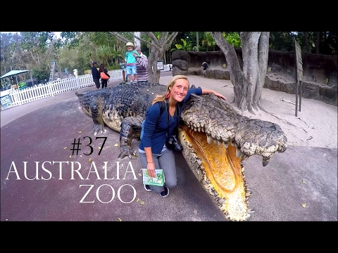 FINDING STEVE IRWINS LEGACY 🐊 AUSTRALIA ZOO✔Travelling Australia - Worldtravel Vlog#37 Weltreise