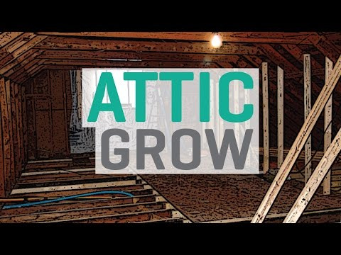 Growing in an Attic / Loft Space
