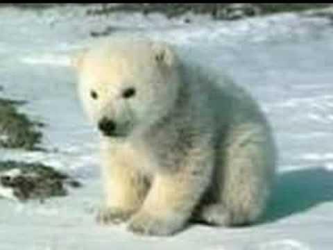 Save Polar Bears