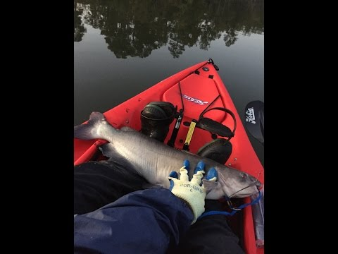 Kayak fishing with homemade catfish noodles- Episode 1