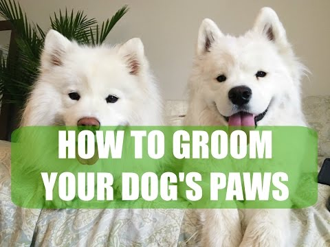How to Groom Your Dog's Paws | Samoyed, Tools, All Dogs!