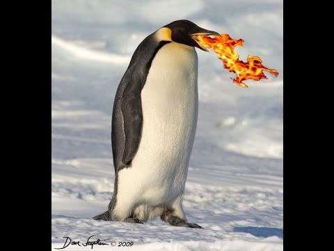 How to build lego penguin