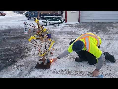 Precise Pruning Christmas tree 2017