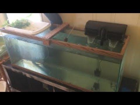 INDOOR CATFISH AQUAPONICS SYSTEM (simple and cheap aquaponics system)(channel catfish)