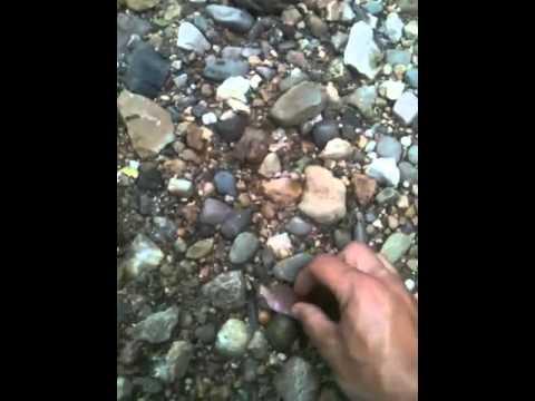 Nice arrowhead hunting the creeks