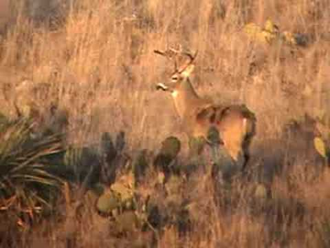 Waited too late after the rut