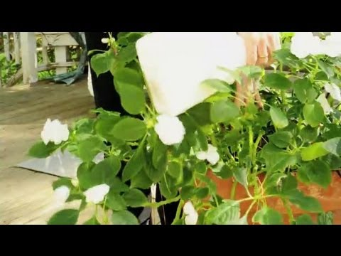 Bugs in Potting Soil Are Eating Plant Roots : Natural Pest Control