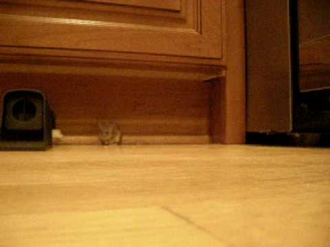 Mice in my house
