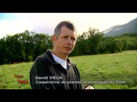 Prioriterre herbes de Provence biologiques et de Provence