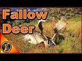 I Found All My Fallow Deer  Thehunter Call Of The Wild 2018 mp3