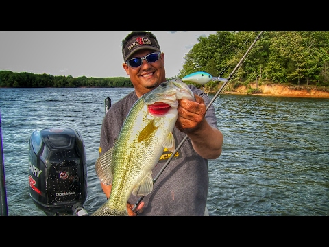 Finding and Catching Post Spawn Bass Offshore
