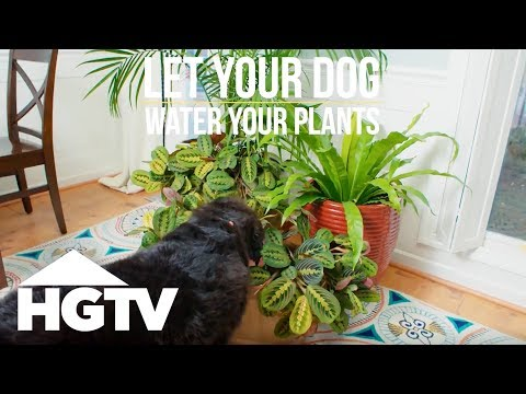 Let Your Dog Water Your Plants! - Way to Grow - HGTV