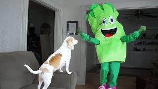Dog Surprised by Giant Broccoli Prank: Funny Dogs Maymo & Potpie