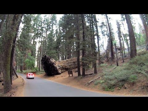 Sequoia National Park 2017