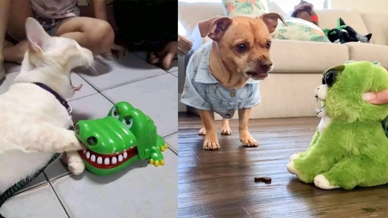 Dog and Cat Reaction to Toy - Funny Dog & Cat Toy Reaction Compilation