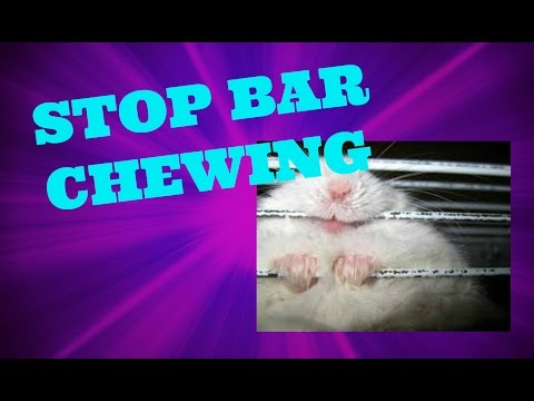 HOW TO STOP YOUR HAMSTER FROM BAR CHEWING