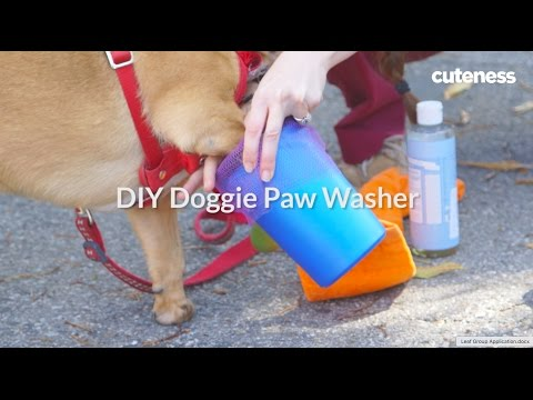 How To Clean Your Dog's Paws - Cuteness.com