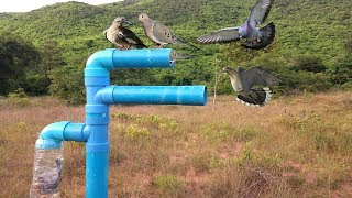 Awesome Quick Bird Trap Using Plastic Bottle And PVC - How to Make Bird With Water Pipe