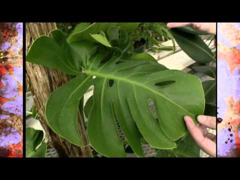 Easy House Plants to Grow
