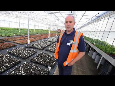 300,000 flowers set for Shrewsbury