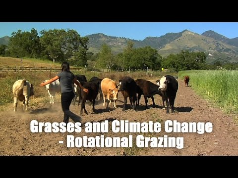 Grasses and Climate Change- Rotational Grazing