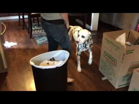 Teaching Wrigley to Stay out of the Trash