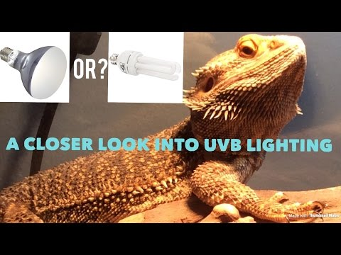 A Closer Look into UVB Lighting.