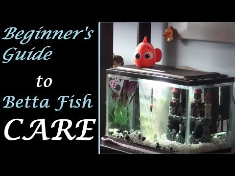 Beginner's Guide to Betta Fish Care