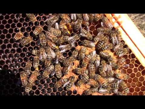 Winter Hive Inspections 2-3-17