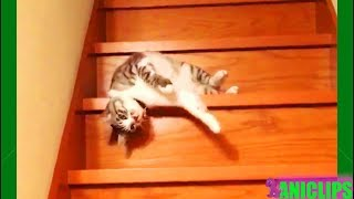 Funny Lazy Cat Going Down The Stairs Compilation