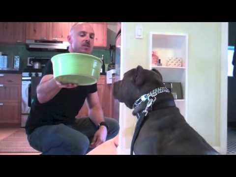 Learn To Train The Good Dog Way: Waiting For Food
