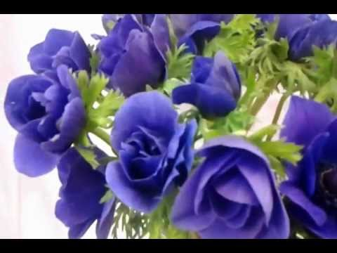 Fresh blue and lavender anemone flowers (fresh cut)