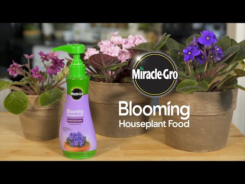 How to Use Miracle-Gro® Blooming Houseplant Food to Feed Your Plants