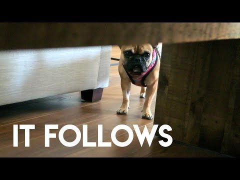 IT FOLLOWS (MY FRENCH BULLDOG)
