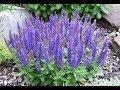 10 растений которые нужно выращивать в огороде Song mp3