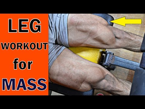 Full Leg Workout (Top 5 Exercise for MASS)