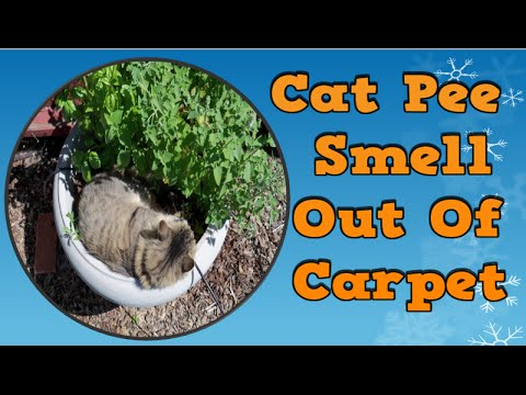 Cat Pee Smell Out Of Carpet, Home Remedies For Cat Pee, How To Get Rid Of A Cat Smell, Rid Cat Urine