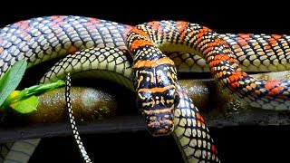 These Are The Most Terrifying Snakes In The World