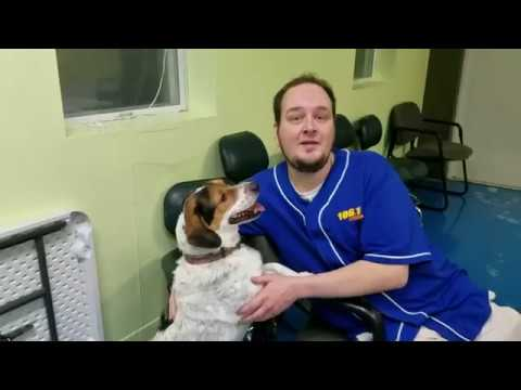 Meet Sam, the Dog Who's Been at the Warrick Humane Society Longer Than Anybody Else VIDEO